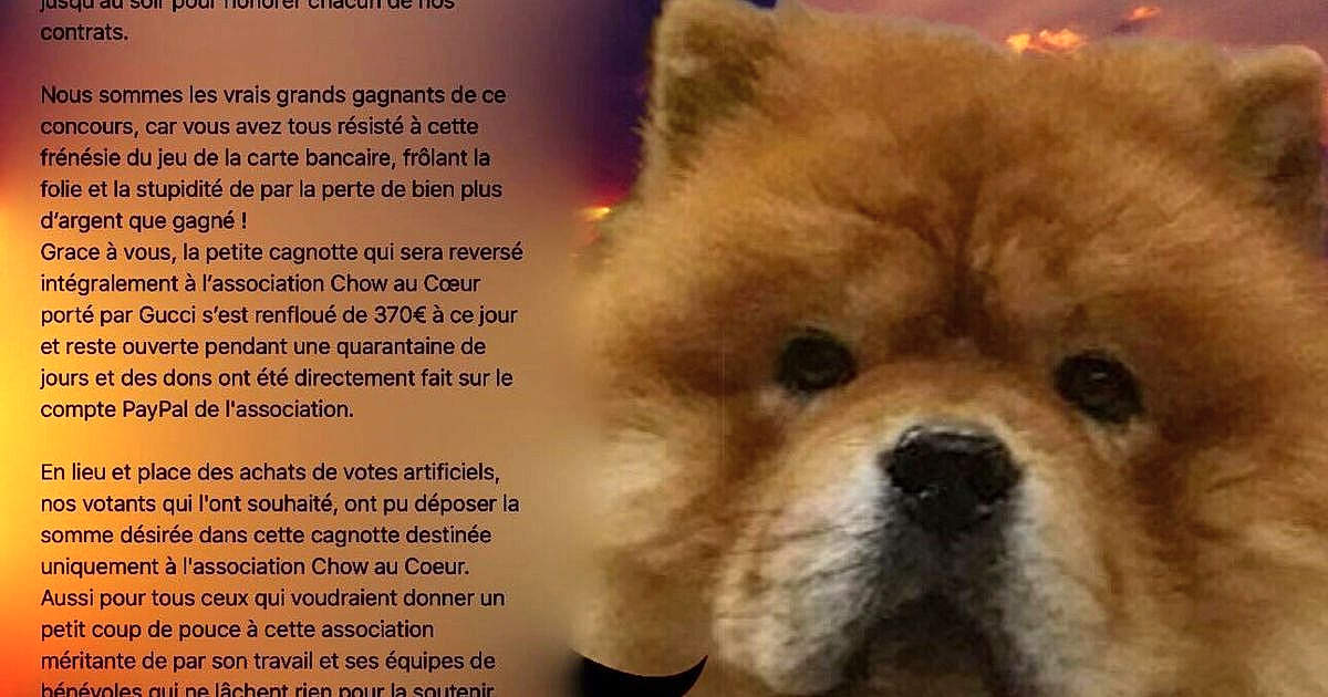 Gucci Chien Chow Chow Concours Photo Chiens Amp Chats